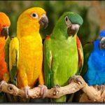 couleurs-perroquets-150x150.jpg